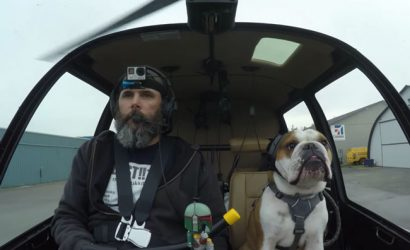 Bulldog's Sweet But Sad Mental Health Issues Are Cured By Flying
