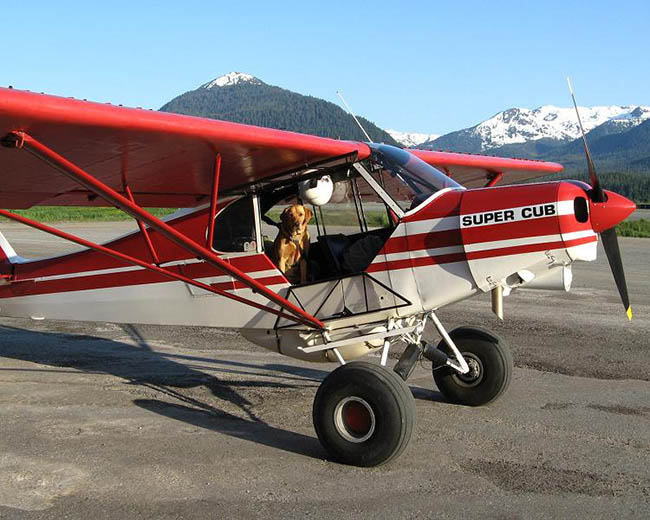 Piper PA-18 with dog pilot.