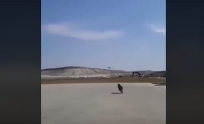 Dog Chases P-51 Mustang. Guess Who's Faster.