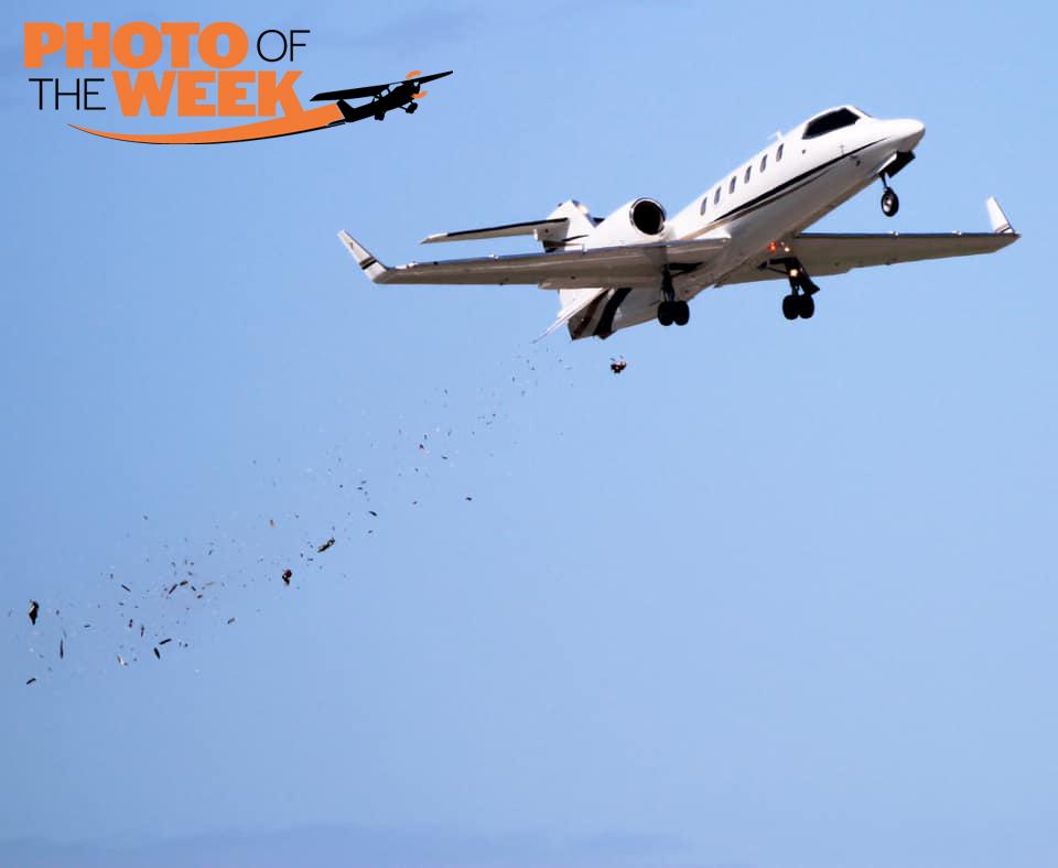 Learjet Bird Strike