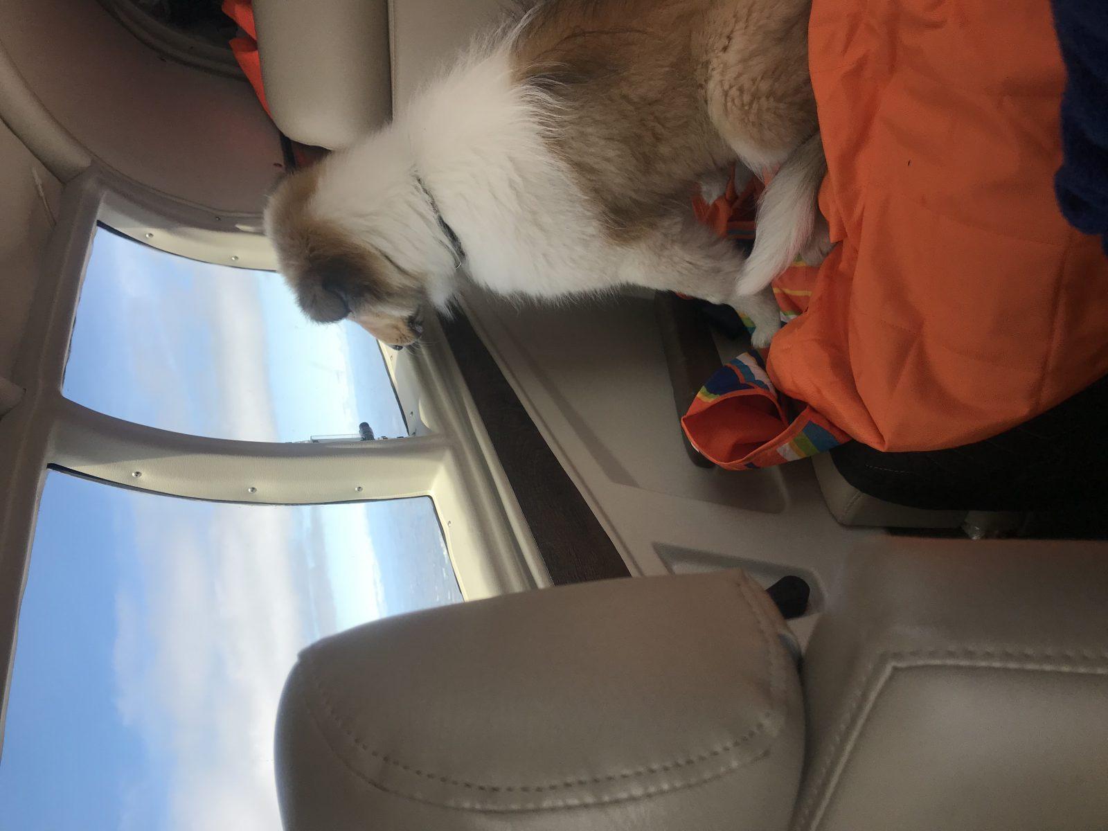 Puppies first flight